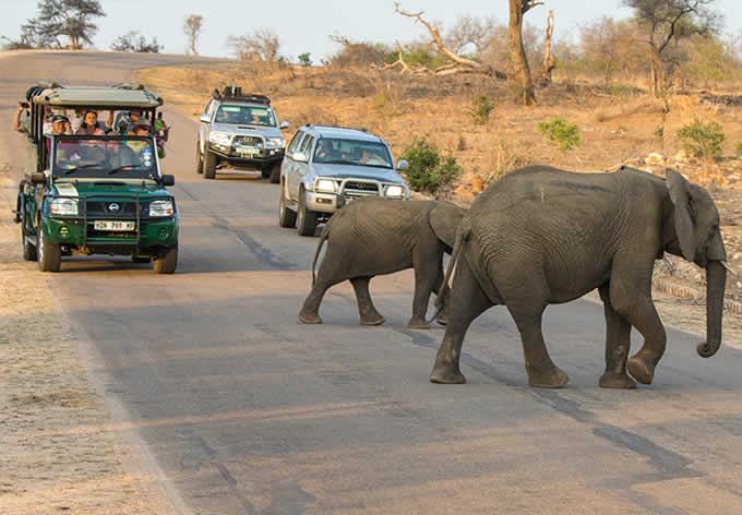 Passeio no Parque nacional Kruger - Observando Elefantes